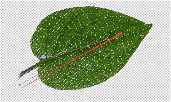 新手效果,利用树叶做出漂亮的装饰背景_www.16xx8.com